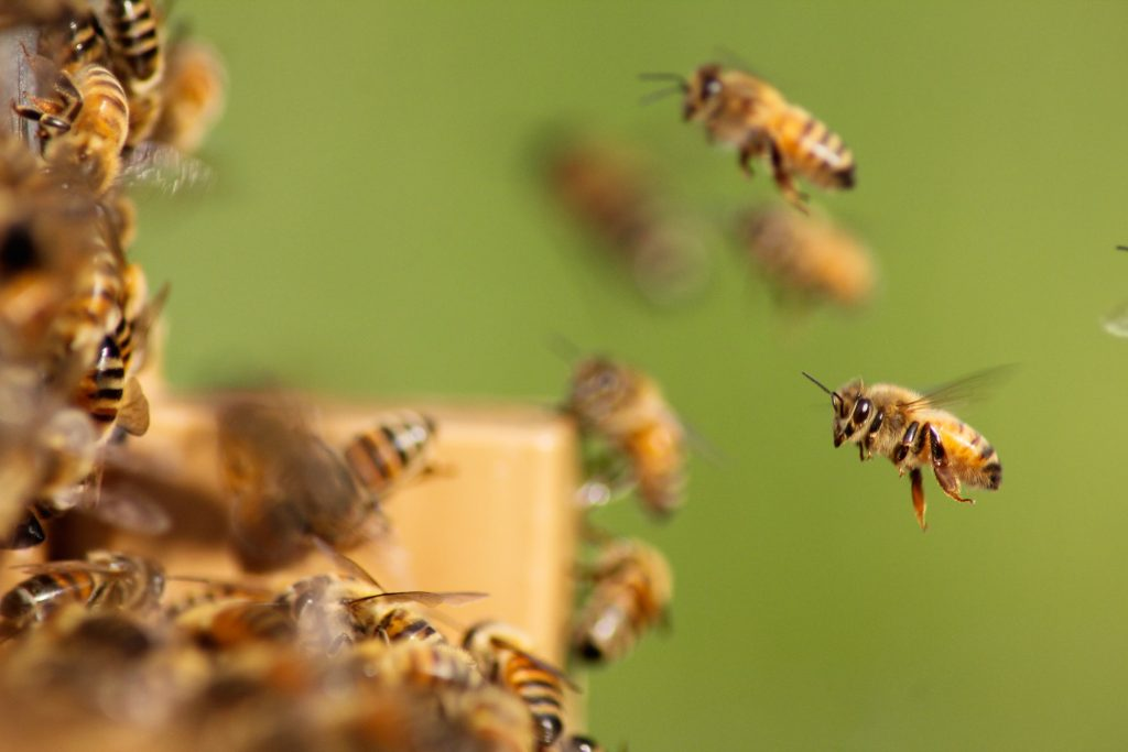 bees for bravery